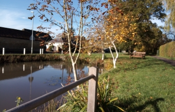 village pond in autumn
